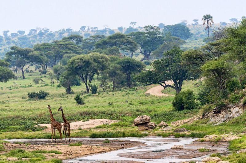 Safari Serengeti 1 journée & Séjour Karafuu Beach Resort and Spa 5 *